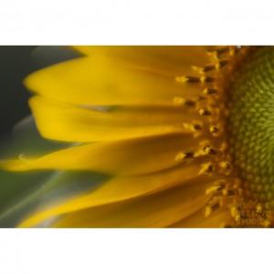 Lensbaby Flowers