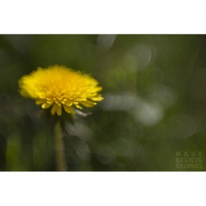 Lensbaby Flowers