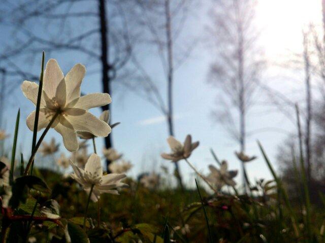 Våren kom i år också!