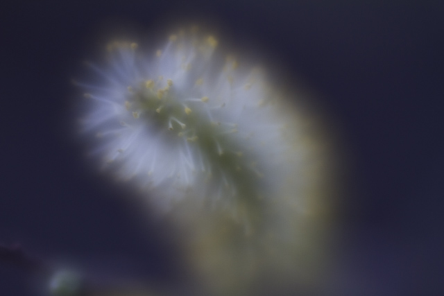 Lensbaby Velvet56-test -Stockholm_2015_1